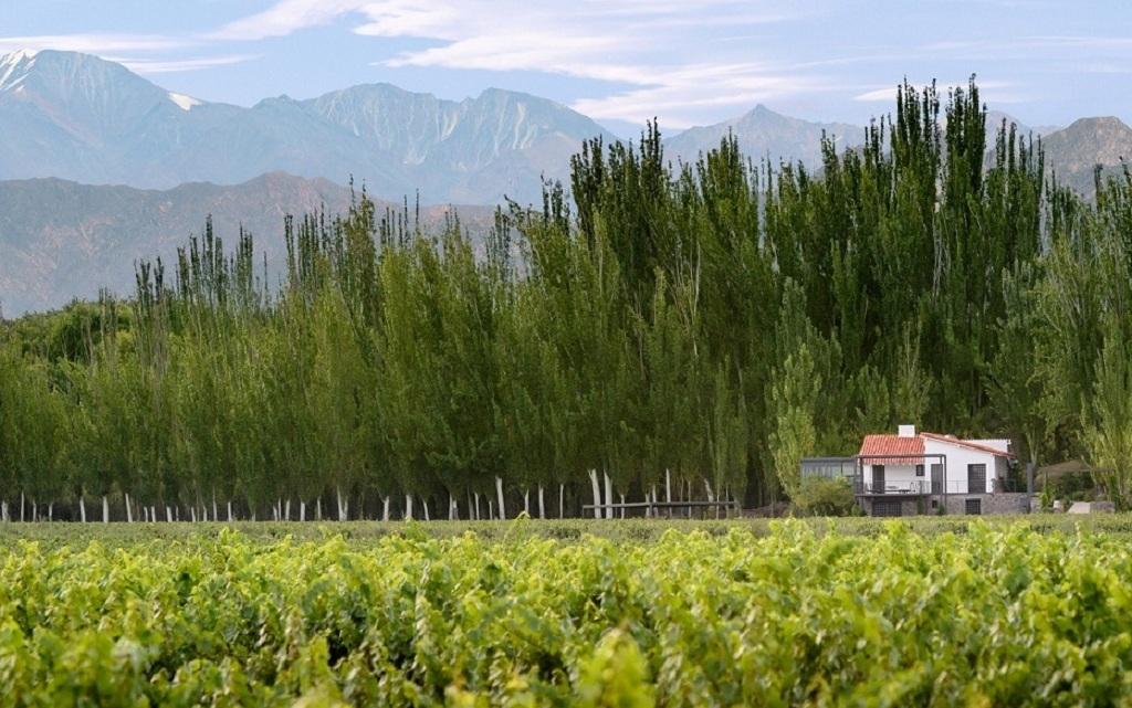 """Finca Bandini, el mayor proyecto vitivinícola de """"Las Compuertas"""", celebra su primer aniversario"""